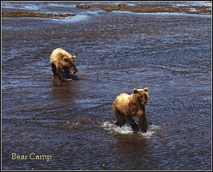Twin bears fishing